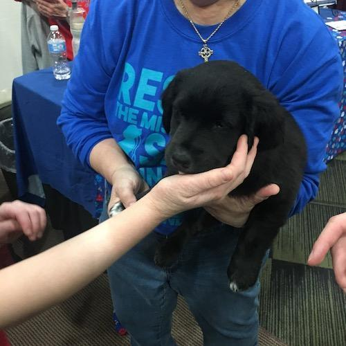 Puppy at Discover Tinley 2019